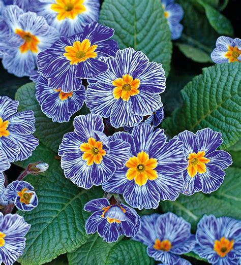 fiori febbraio in edicola dal 23 gennaio casa in fiore di febbraio cose