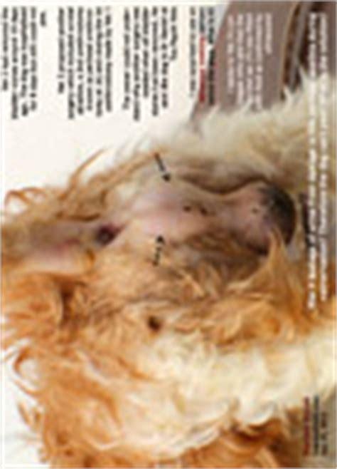 shih tzu bladder problems veterinary medicine surgery singapore toa payoh vets dogs cats rabbits guinea