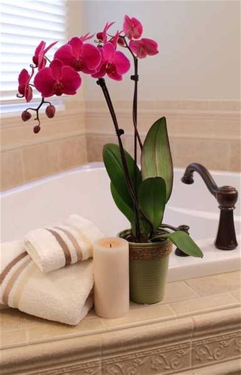 bathroom flowers beautiful bathroom decorating and home staging with orchids