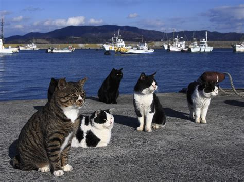 cat island cat island earth blog