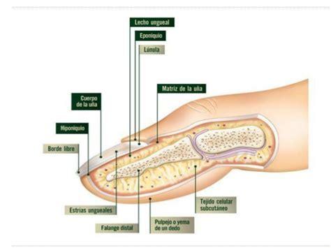 como decorarte las uñas delos pies patolog 237 a ungueal patologia de la u 209 a onicomicosis
