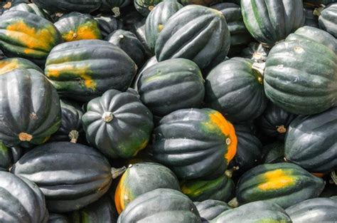 94 vegetables you eat can you eat acorn squash seeds livestrong