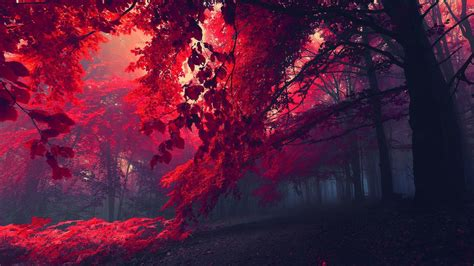nature red leaves mist red wallpapers hd desktop