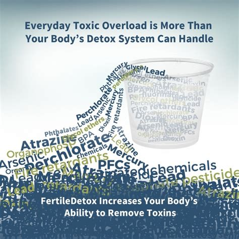 Detox Your Endocrine System by Fertility Cleanse Before And During Trying To Conceive