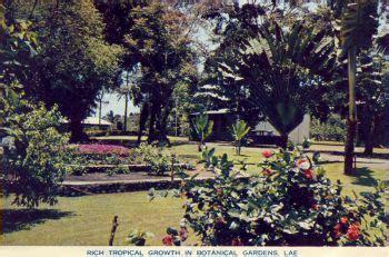 lae botanical gardens, morobe province. circa 1960 | papua
