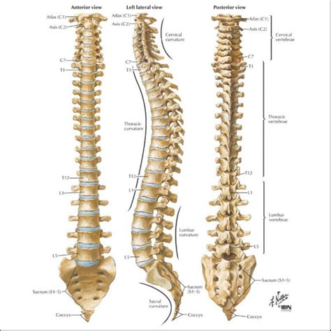 diagram spine spine biomechanics research and testing testresources