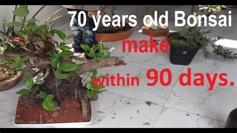at home how to make a bonsai tree bonsai starter kit bonsai tree