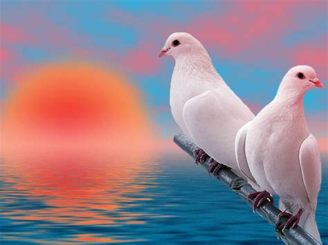 bird couple wallpaper hd love bird wallpapers wallpaper cave