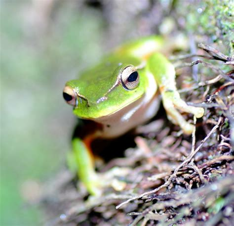 how to get rid of frogs in my backyard pests as pets part 3 debugged