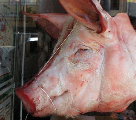 testa di maiale al forno giugliano musulmani nel mirino testa di maiale fuori la