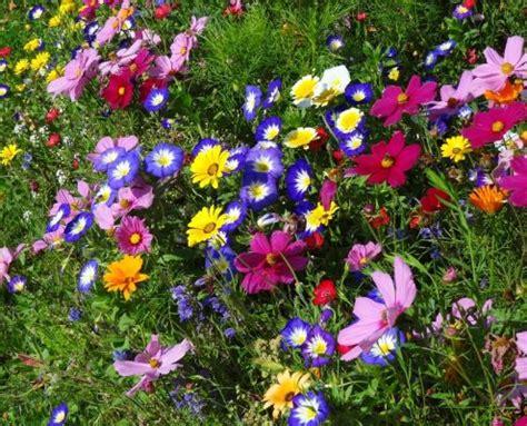 carlo fiori mostra fiori dei ci di carlo picone contatto