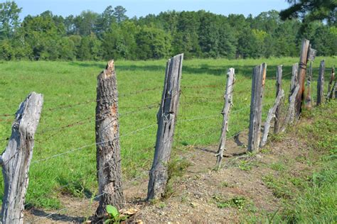 made from trees fence posts made of trees these days of mine
