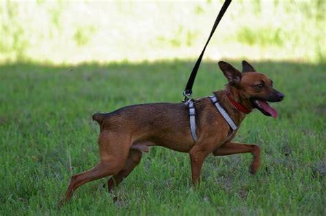 suche neues zuhause für meinen hund beschreibung lebenslauf hola amigos oder hallo freunde