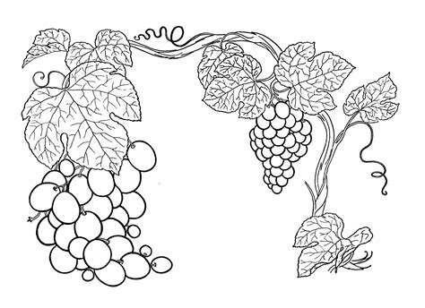 vine coloring pages vines of coloring pages coloring pages