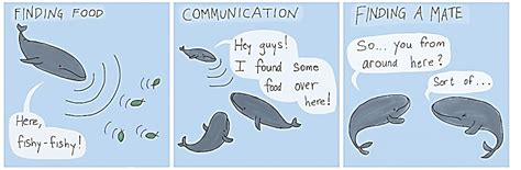 Whale Chat do you speak whale animal bioacoustics animal