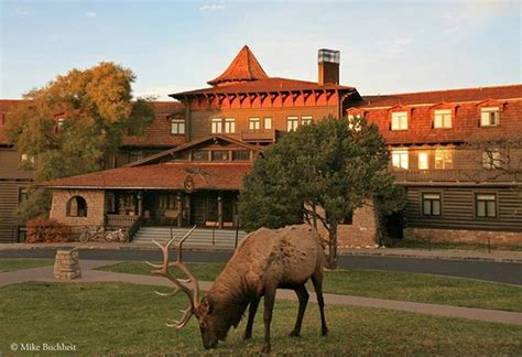 Grand Canyon Lodge Dining Room by El Tovar Lawn With Deer Grand Canyon Pinterest Elk