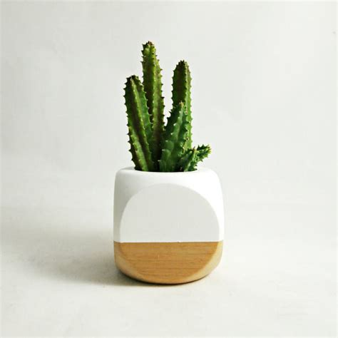 desk planter 19 tiny plants to cheer up your sad work desk