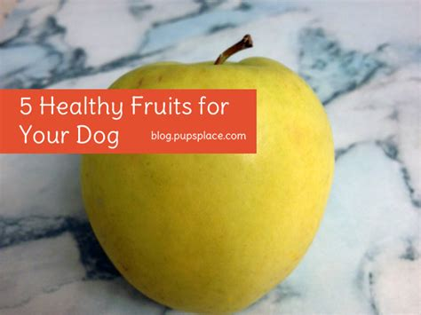 cherries for dogs treat recipes pup s place