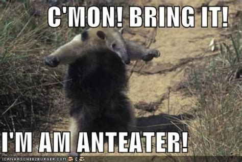 Anteater Meme - image 108565 i m an anteater know your meme