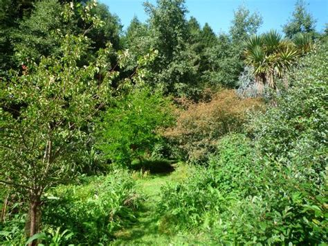 Edible Forest Gardens by Forest Gardening Establishing The Ground Layer Permaculture Earth News