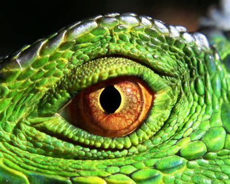 my shot minute reptiles
