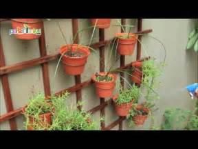 Pot Tanaman Hias Dinding kreasi indah tanaman pot di dinding