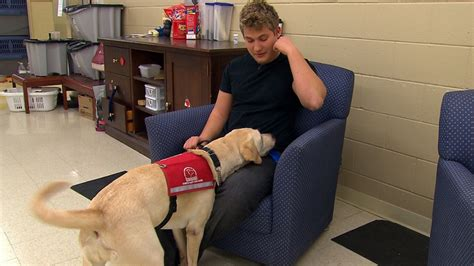 low blood sugar in puppies program teaches dogs to detect high and low blood sugar in diabetics ctv news