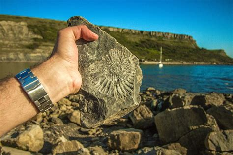 fossil england coast  photo  pixabay