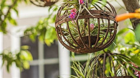 Creative Home Decorating by How To Grow Air Plants