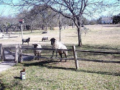 settlers crossing bed and breakfast pioneer homestead picture of settlers crossing bed and