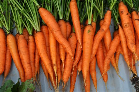 pictures of carrots carrot juice benefits