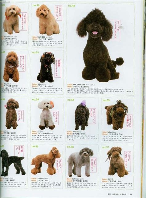 what are yhe different kinds of poodle cuts 112 best images about grooming style on pinterest