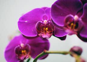 imagenes de flores asombrosas orquideas y violetas