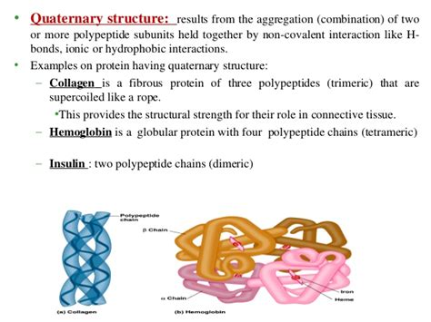 protein quaternary structure bonds amino acids and protein
