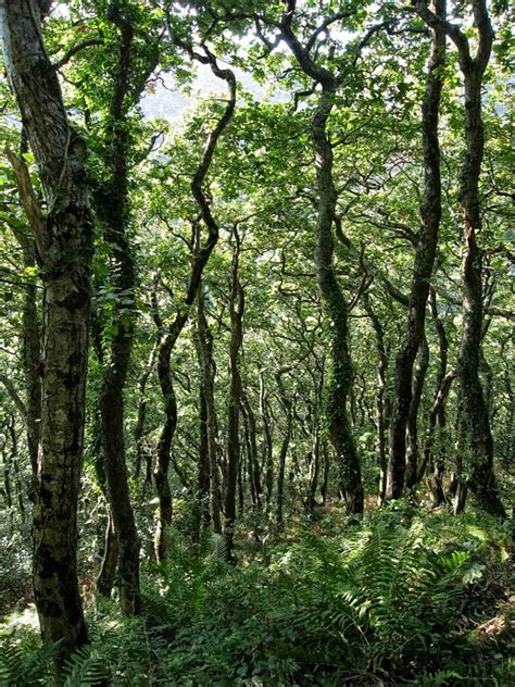 woodland forest plants and trees free photo woodland trees forest dappled free image