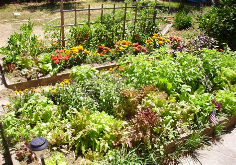 edible gardens grow your own veg sustainable green garden