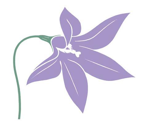 act floral emblems australian plant information