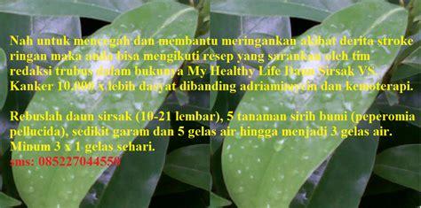 Obat Herbal Lhiformen rumah tasikmalaya daun sirsak sebagai herbal stroke