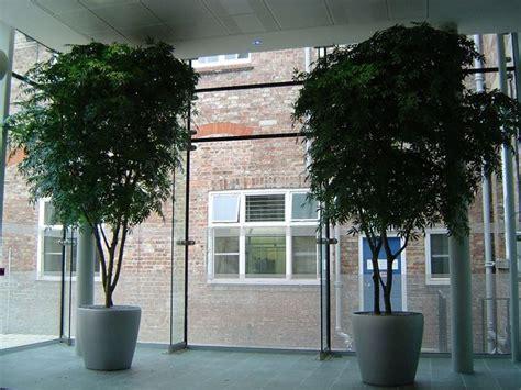 alberi da interno alberi artificiali piante finte alberi finti