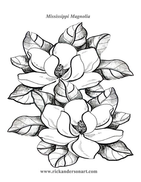 magnolia tree coloring pages free coloring pages of magnolia tree