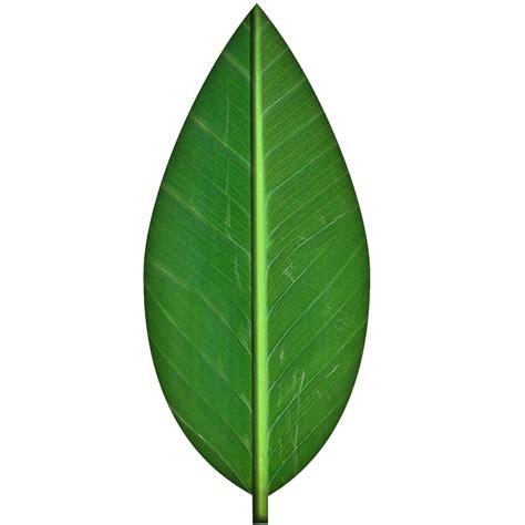 green wallpaper transparent green leaf texture by spiralgraphic on deviantart