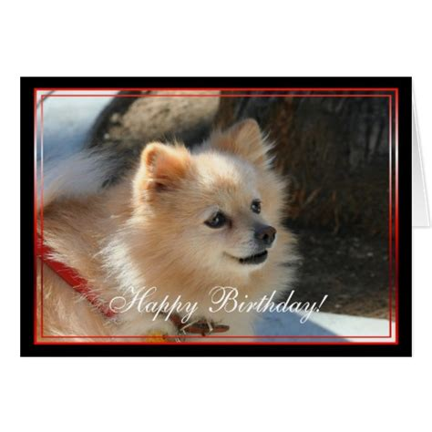 happy pomeranian happy birthday pomeranian greeting card zazzle