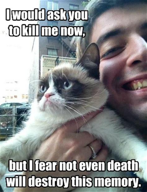 Good Meme Captions - funny grumpy cat