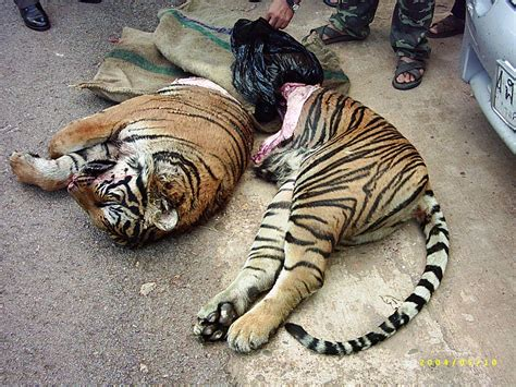 Over hunting mdg project save the animals