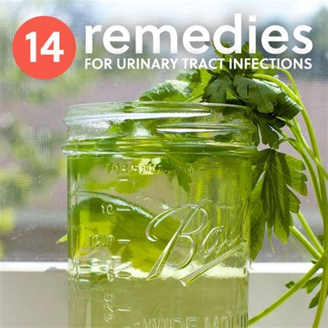 Urine Detox Home Remedies by Best 25 Uti Remedies Ideas On Urinary Tract