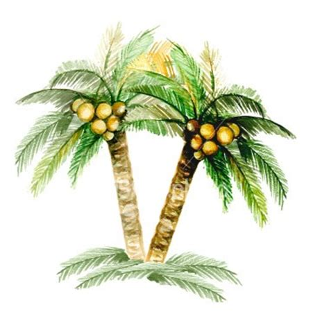 Uses Of The Coconut Palm by Magical Creatures Myth On The Coconut Tree