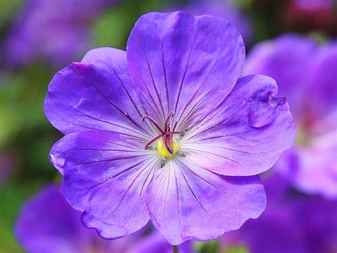 Flowers Violet violet flower domain free photos for