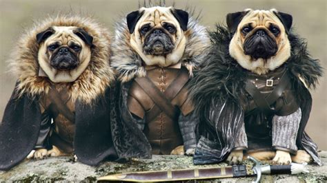 costumes for pugs pug in costume 10 cool ideas for pug costumes pug now all about pug