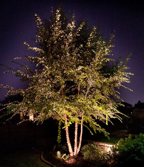 Landscape Tree Lighting Landscape Lighting Trees