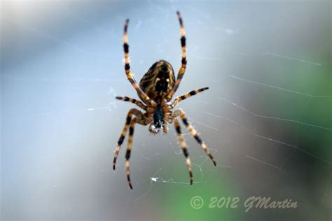 Garden Spider Pacific Northwest Windmill Consulting Photography